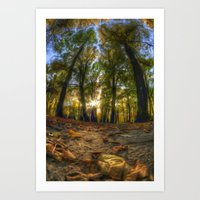 Painted woods Art Print