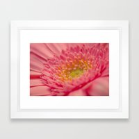 Pink Germini. Framed Art Print