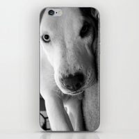I Triple Dog Dare You iPhone & iPod Skin