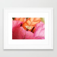 Beautiful Brazilian flower's Heart  91 Framed Art Print