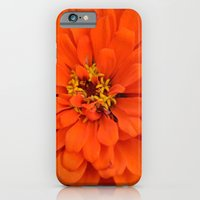 iPhone & iPod Case featuring Orange Zinnia by Kimberly Castello