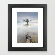 Roots and trees... Framed Art Print