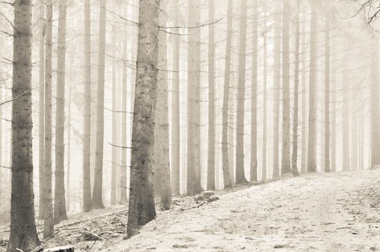 pale winter forest I Canvas Print