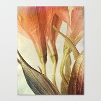 Lazy Morning Canvas Print