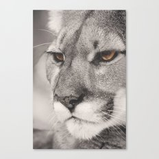 Cougar II Canvas Print