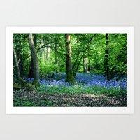 Bluebell Dell Art Print