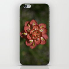 Indian Paintbrush iPhone & iPod Skin