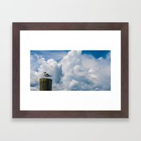 Apalachicola Seagull II Framed Art Print