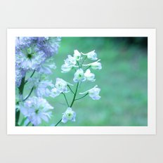 Delphiniums in Bloom Art Print