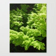 Japanese Maple Green Canvas Print