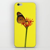 African Monarch iPhone & iPod Skin