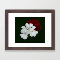 Geranium as art Framed Art Print