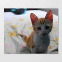 ORANGE CAT. Canvas Print