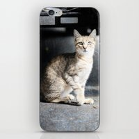 Strange Cats iPhone & iPod Skin