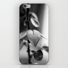 Sparkles in Black and White iPhone & iPod Skin