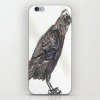 Watercolor Crow iPhone & iPod Skin