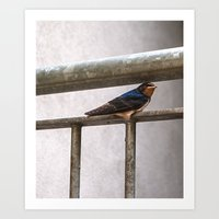 One Swallow Doesn't Make… Art Print