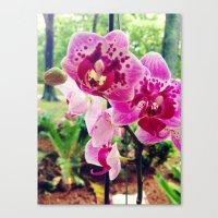 Orchid Garden Canvas Print