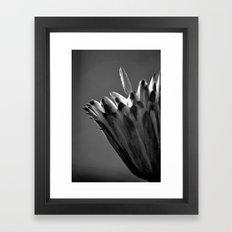 Tulip Tree Fruit Framed Art Print