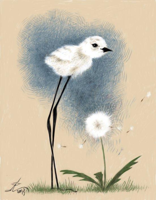Snowy Stilted Plover Art Print