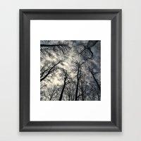 Sky-reaching Trees Framed Art Print