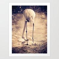 White Flamingo Art Print