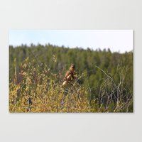Red-tailed Hawk In The T… Canvas Print