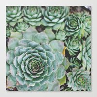 Succulents I Canvas Print