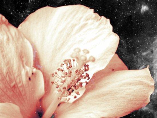 Space Flower Art Print