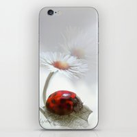 For The Love Of A Daisy iPhone & iPod Skin