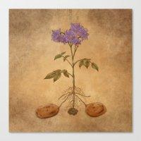 Anatomy Of A Potato Plan… Canvas Print