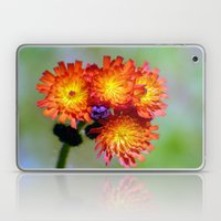 Orange Hawkweed Laptop & iPad Skin