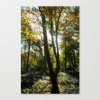 Glowing Woods. Canvas Print