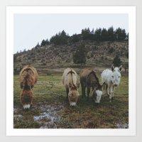 Miniature Donkeys Art Print
