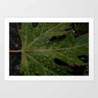 rainy leaf Art Print