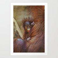 Orangutan Baby Art Print
