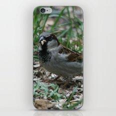 House Sparrow iPhone & iPod Skin