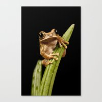 Canvas Print featuring Marbled Tree Frog by Fran Walding