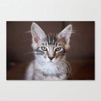 Kitten Portrait 2596 Canvas Print