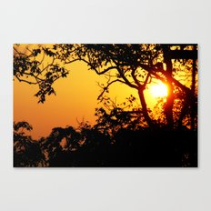 Silhouetted Trees Canvas Print
