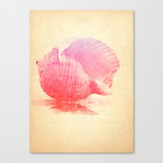Pink Seashell Canvas Print
