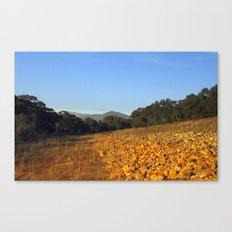 Reflecting Light Canvas Print
