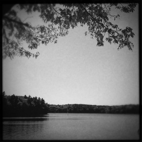On the bank of Walden Pond Art Print