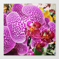 Orderly Orchids Canvas Print