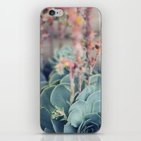 Echeveria #4 iPhone & iPod Skin