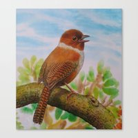 A Brown Bird Canvas Print