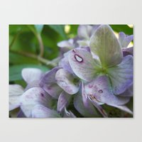 Fairy's Bed Canvas Print