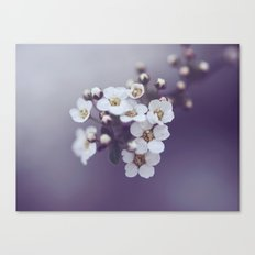 Flower in the mist Canvas Print