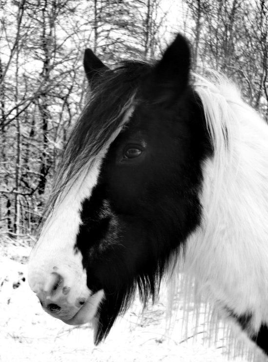 Horse. Black+White.Snow. Art Print