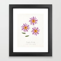 Purple Aster Modern Botanical Framed Art Print